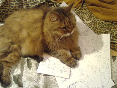 Мой кот уже стабильно решает любой случайно выбранный вариант ЕГЭ по математике минимум на 80 баллов